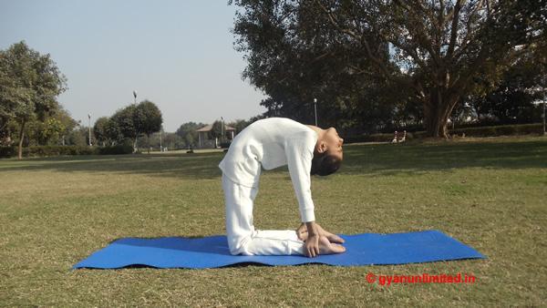 ustrasana-steps-benefits-precaution